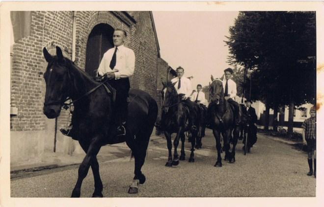 paarden op de dries