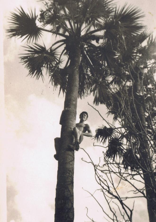 Jermee even een Cocosnoot die zal wel smaken Jan de aap 29 oktober 1946